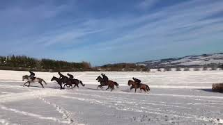 Horses cantering in the snow