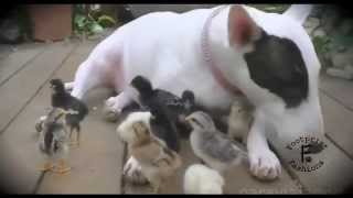 Happy Mother's Day! Cute Animal Video [Animal Compilation]