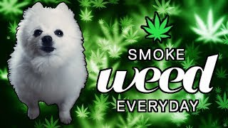 Smoke Weed Everyday em cachorrês (ORIGINAL)