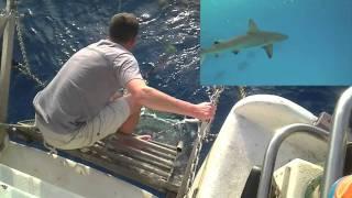 GoPro Shark Cam on a stick!
