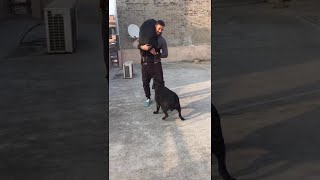 Garry Sandhu Playing With Rambo and Ranjha | funny video