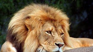Marante & Diapasão  - Leão domado      -         (baú de recordações)