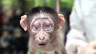 Macaco falando hoje é sexta feira!!! a não hoje e quinta oia