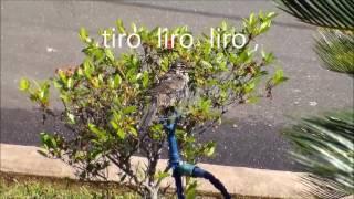música   Portuguesa ... fado tiro liro liro ,   com Luiz Carlos Ventura