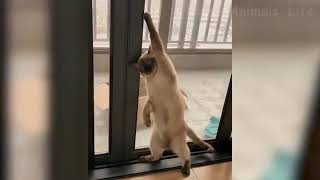 Funny cat🐈 and dogs 🐩 playing
