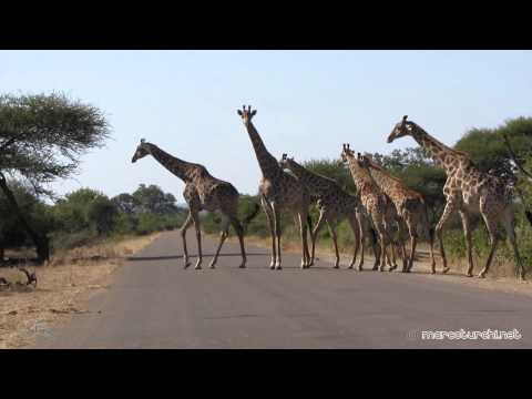 Kruger Park – South Africa – June 2012