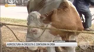 TG BASSANO (07/05/2018) - AGRICOLTURA IN CRESCITA E CONTADINI IN ERBA