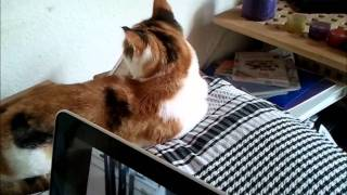 I love cats ft DJ