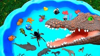 Lots of Zoo Wild Animals in Water Learn Colors For Children With Real Safari Videos