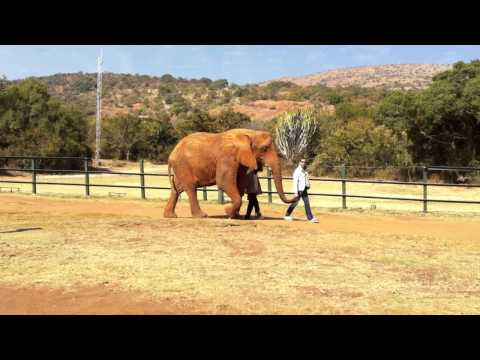 Elephant Sanctuary near Johannesburg, South Africa