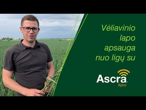 Žieminių kviečių apsauga nuo ligų su Ascra Xpro