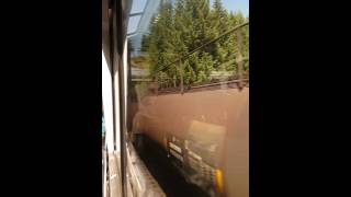 Relaxing train ride through the Forest