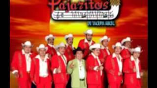 LOS PAJARITOS DE TACUPA MICH - CARIÑO DONDE ANDARAS EN VIVO