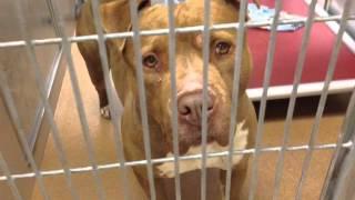 Visiting the Animal Shelter - Vlogmas Day 10