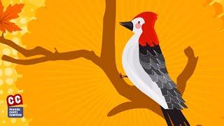 Canticuentos - El Pájaro Carpintero | Letra