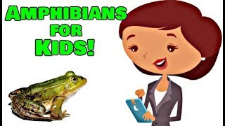 Amphibians For Kids | Animal Learning Video
