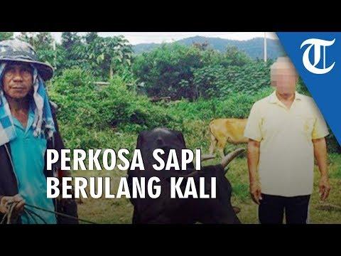 Download Video Kakek Ini Perkosa Sapi Berkali-kali, Tetangkap Tanpa Busana Saat Beraksi Di Hutan Dan Tanpa Celana