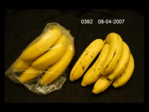 Comparison of Bananas stored in Fresh & Smart Liners versus Unpacked in Ambient