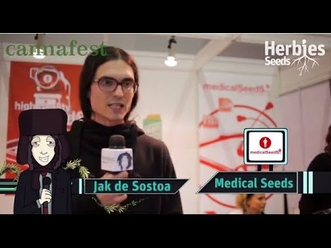 Medical Seeds Co @ Cannafest 2013 Prague / Prahac