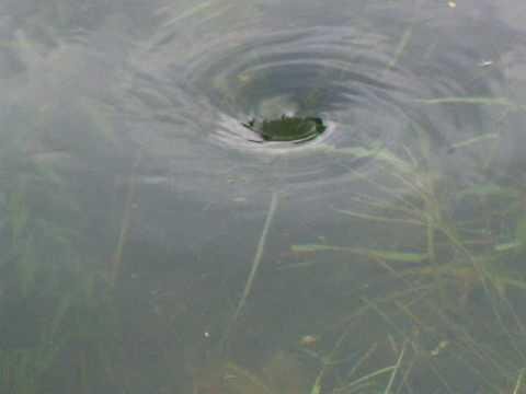 minature whirlpool, nepal