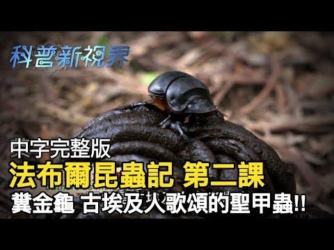 激昂的生命   以糞便為家的糞金龜竟然也有工作SOP分布圖,牠們的種類與功能又各是為何呢? 【法布爾昆蟲記 第二課】全片線上看 - YouTube