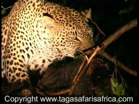 African Safaris to Simbambili Game Reserve
