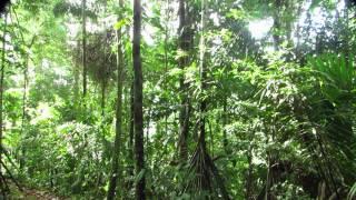 Rainforest Sounds Panamá Jungle