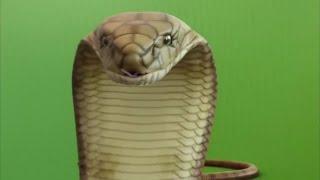 greenscreen snake attack