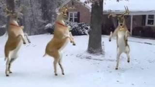 Karácsonyi zene SZARVASOKKAL