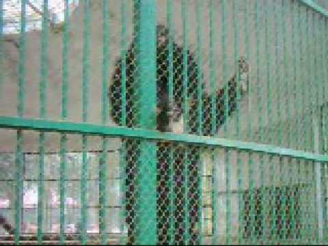 Our National Zoo_Ep 09