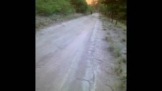 Os zorro do asfalto!