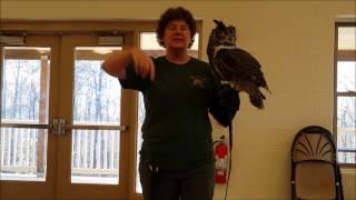 Live Wildlife Programs for Schools