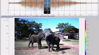 Elephant Oral Rumble - 5 fps
