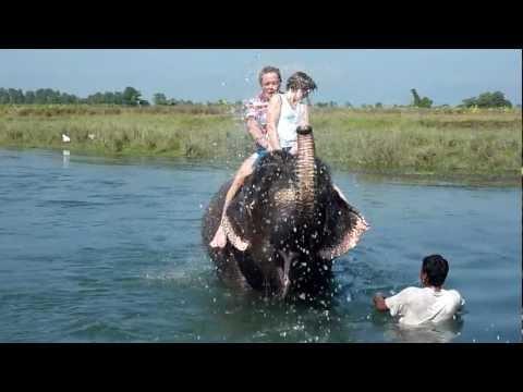Elephant bath at Sapana Village Lodge in Chitwan Nepal