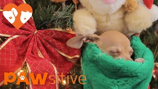 Rescue Puppies Have Best Christmas Ever!