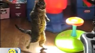 Michael Jackson - Thriller (Cats version)