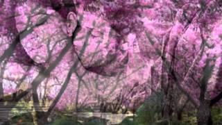 Canción del Adios **** Soledad Pastorutti & Los Nocheros