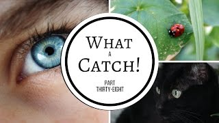 What a Catch! - Part 38 (A Miraculous Ladybug Fanfiction)
