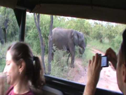 Curious Baby Elephant.wmv