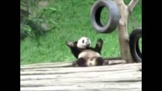Cute Animals Dancing to Papa Americano