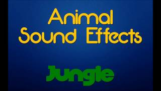Rainforest Jungle Ambiance | Animal Sound Effects