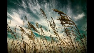 Johnny Mathis - Touch The Wind (Eres tu)