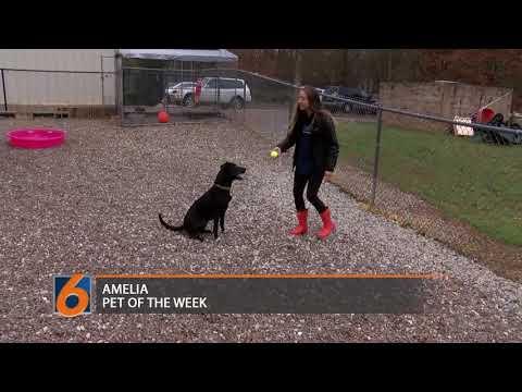 Amelia--Pet of the Week