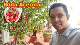 Como podar acerola da forma correta (frutificação, beleza e controle de pragas)