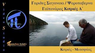 Χταπόδι - Γαρίδες Σαγανάκι - Σεβίτσε - Μπακαλιάρος / Ψαροταβέρνα Γαϊτανάρος Κιτριές Α΄