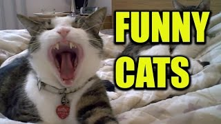 Cats yawning with sound effects | Funny Cats Yawning compilation