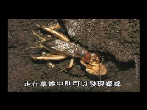 國小_自然_認識昆蟲【翰林出版_四下_第二單元 昆蟲王國】 - YouTube