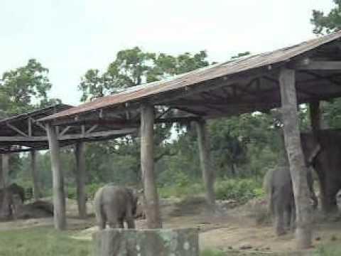 Elephant Breeding Centre Saurah, Chitvan, Nepal.avi