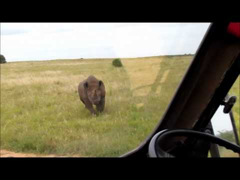 Black Rhino Charge- Addo Elephant National Park- CrissCross Adventures-Addo Tours+Safari's