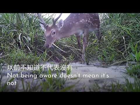 龍崎牛埔自然生態之美 2-1 鹿科動物